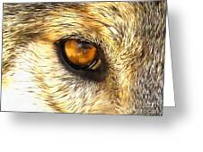 Eye Of A Wolf. Greeting Card