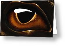 Eye Of Baby Bronze Greeting Card