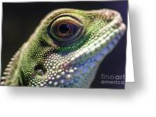 Eye Of Lizard Greeting Card