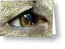 Eye Of The Canine Greeting Card