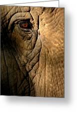 Eye Of The Elephant Greeting Card
