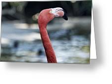 Eye Of The Flamingo Greeting Card
