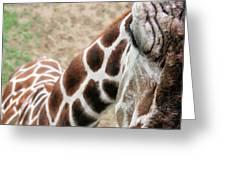Eye Of The Giraffe. Greeting Card
