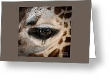 Eye Of The Giraffe Greeting Card