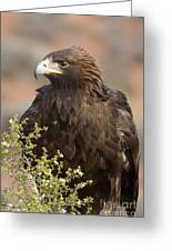 Eye Of The Golden Eagle Greeting Card