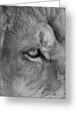 Eye Of The Lion #2  Black And White  Greeting Card