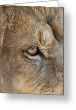 Eye Of The Lion #2 Greeting Card