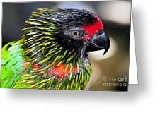Eye Of The Tropics Greeting Card