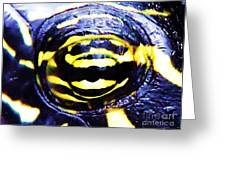 Eye Of The Turtle Greeting Card