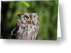 Eye On The Fly Greeting Card