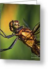 Eye To Eye Dragonfly Greeting Card