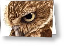 Eyeful Greeting Card