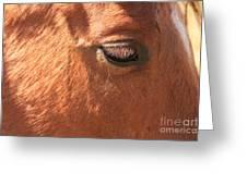 Eyelashes - Horse Close Up Greeting Card