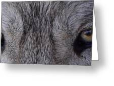 Eyes Of A Wolf Greeting Card