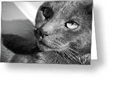 Eyes Of Russian Blue Greeting Card