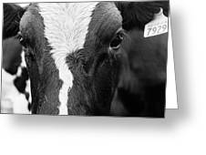 Eyes Of The Cow Greeting Card