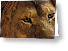 Eyes Of The Lion Color Greeting Card