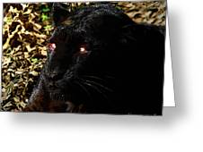 Eyes Of The Panther Greeting Card