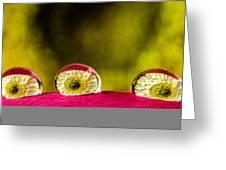 Eyes Of The Petal Greeting Card