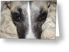 Eyes Whippet Greeting Card