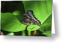 Eyespots On The Closed Wings Of A Blue Morpho Butterfly Greeting Card
