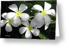 F1 Plumeria Frangipani Flowers Hawaii Greeting Card