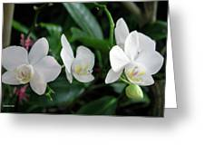 F11 Orchid Flowers Greeting Card