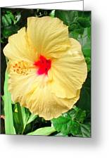 F12 Yellow Hibiscus Greeting Card