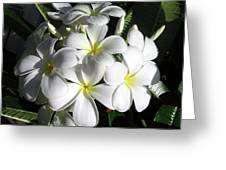F13-plumeria Flowers Greeting Card