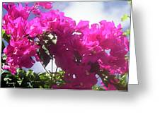 F15 Bougainvilleas Flowers Greeting Card