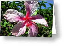 F17 Pink Hibiscus Greeting Card