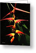 F19 Heliconia Flowers Hawaii Greeting Card