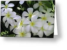F2 Plumeria Frangipani Flowers Hawaii Greeting Card