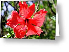 F20 Red Hibiscus Greeting Card