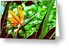 F21 Bird Of Paradise Flower Greeting Card