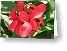 F22 Cannas Flower Greeting Card
