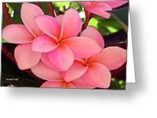 F23 Plumeria Frangipani Flowers Greeting Card