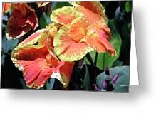 F24 Cannas Flower Greeting Card