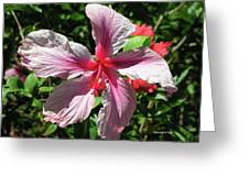F5 Hibiscus Flower Hawaii Greeting Card