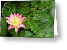 F6 Water Lily Greeting Card