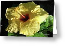 F9 Yellow Hibiscus Greeting Card