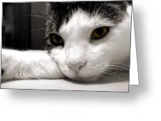 Fabulous Feline Greeting Card