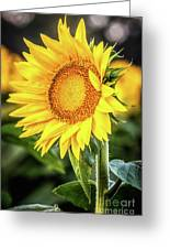 Just Another Pretty Face Greeting Card