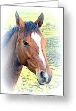 Face The Horse That Is Facing You   Greeting Card