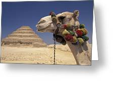 Face Of A Camel In Front Of A Pyramid Greeting Card