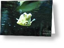 Face Of A Horned Boxfish Swimming Underwater Greeting Card