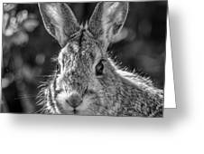 Face Of A Rabbit In Black And White Greeting Card