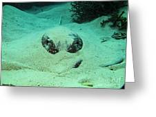 Face Off With Stingray Greeting Card