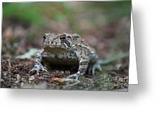 Face To Face With A Fowler Toad  Greeting Card