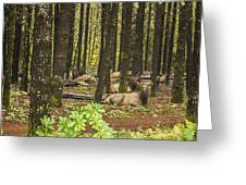 Faces In The Woods Greeting Card